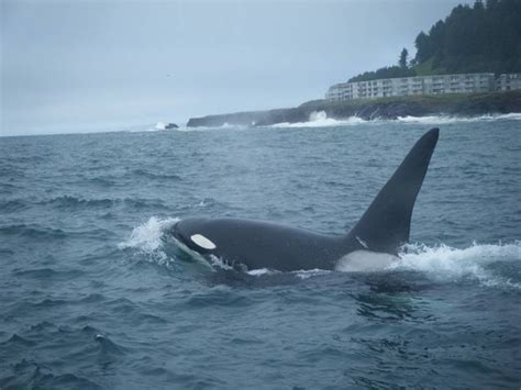 whale watching in depot bay oregon awsome places and