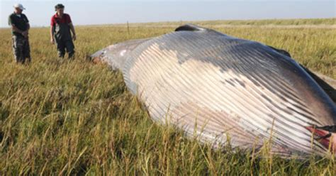 Find In Utah Mysterious Remains Of A Whale Found In A Field In Utah