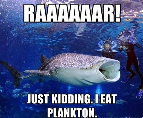 Just Joking Meme - 20 funny shark pictures