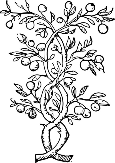 fruit tree drawing fruit tree branches clip at clker vector clip