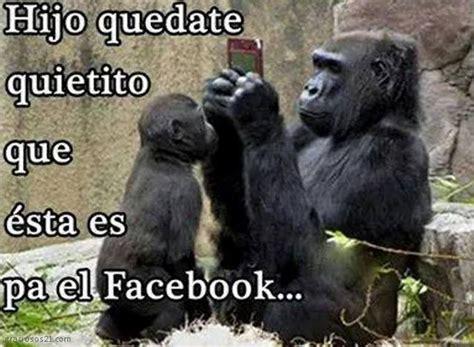 im 193 genes de monos chistosos con frases mejores imagenes de gorilas chistosos con gestos