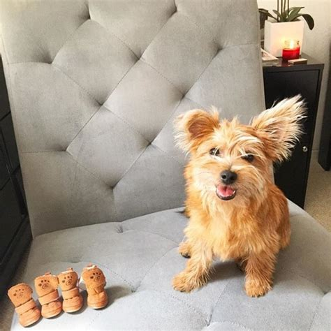Looks For Your Pet Isnt Walking Season by 8 Tips To Get Your Walking In Booties This Winter Season
