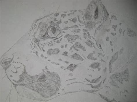 dibujar animales salvajes a lapiz imagui dibujos de animales salvajes a lapiz imagui