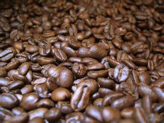 Kopi Luwak Green Bean Mentah Siap Goreng kopi luwak bali
