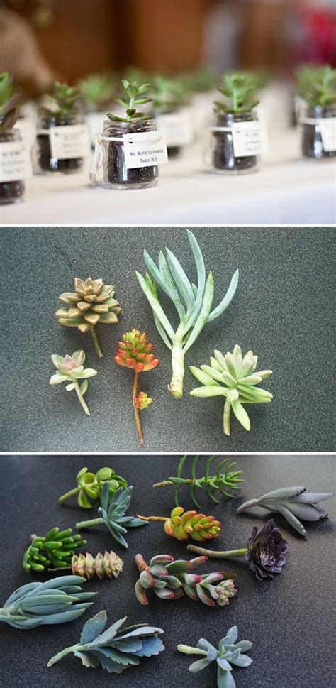 diy succulents diy mini succulent planters tiny jars repurposed baby