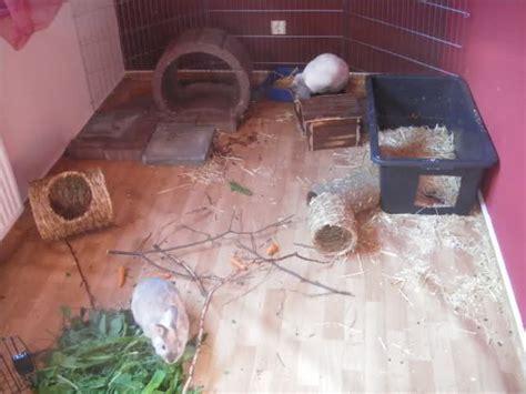 pvc boden mit dfreiniger reinigen wie oft macht ihr stall gehege k 228 fig sauber kaninchen