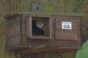 Barn Owl Houses Build A Barn Owl House Barn Owl Box Plans Http