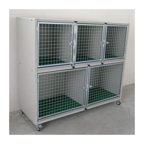 gabbie cani gabbie degenza box esposizione per cani e gatti