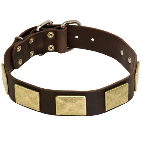 rottweiler collars stylish leather rottweiler collar with vintage brass plates rottweiler store