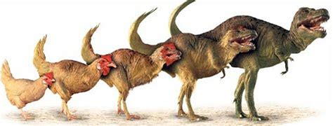 """dino drumsticks: scientists grow """"dinosaur legs"""" on a chicken"""