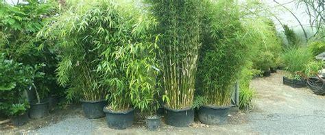 bambus garten bambus garten saigonford info
