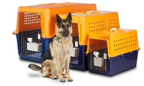 jetpets animal transport jetpets the pet travel