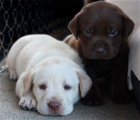 free puppies denver pets denver co free classified ads