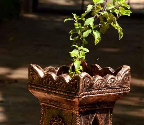 location  tulsi plant   vastu benefits