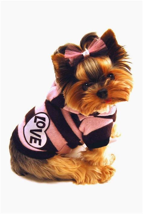 puppies in clothes best 25 popular breeds ideas on friendly breeds