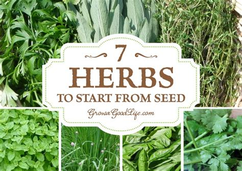 growing herbs  herbs  start  seed