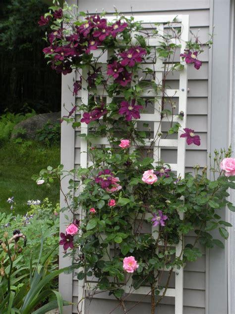 rose trellis clematis  rose trellis garden share