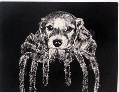 puppy spider spider puppy by squidilee on deviantart