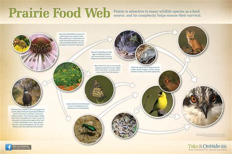 prairie food prairie food web www pixshark images galleries with a bite