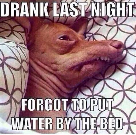 Lisp Meme - 89 best lisp meme dog images on pinterest