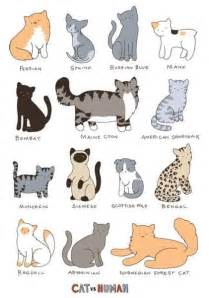 types of cats cat breed chart cats on cats on cats