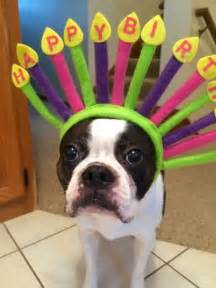 1000 ideas about happy birthday animals on pinterest animal jam animals and pets and animal