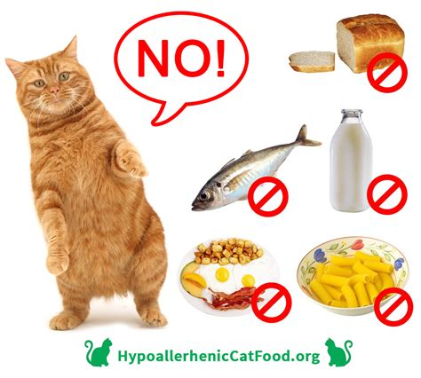 can you feed a cat food what food you can feed your cat hypoallergeniccatfood org