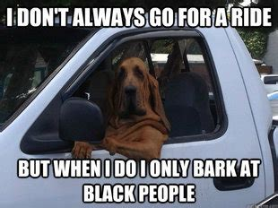 Racist Dog Meme - slightly racist dog memes quickmeme