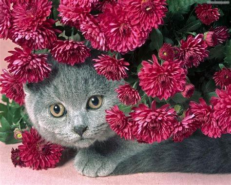 i fiori sfondo quot gatto tra i fiori quot 1280 x 1024 animali