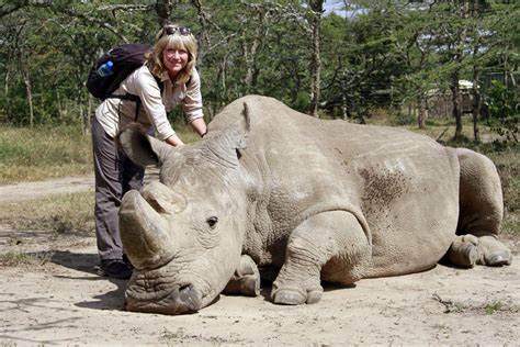walking  rhinos  kenyas laikipia county london