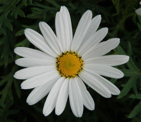 fiori fotografie fiore marg fotografia fiori