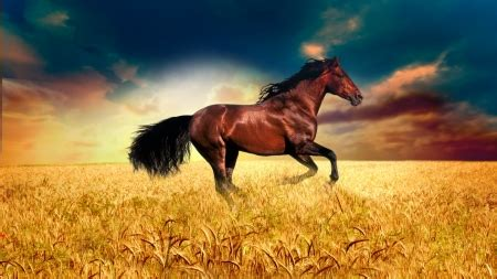 firefox horse themes running free horses animals background wallpapers on