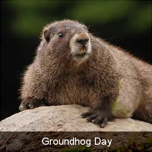 groundhog day events chiff your guide to the best on the web