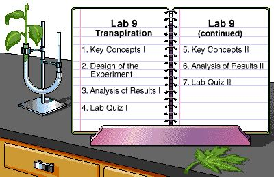 transpiration lab bench transpiration lab bench 28 images 100 lab bench