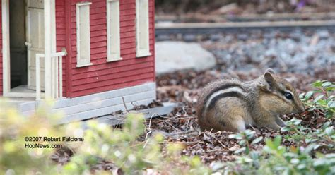 chipmunk house hopkinton news only at hopnews com