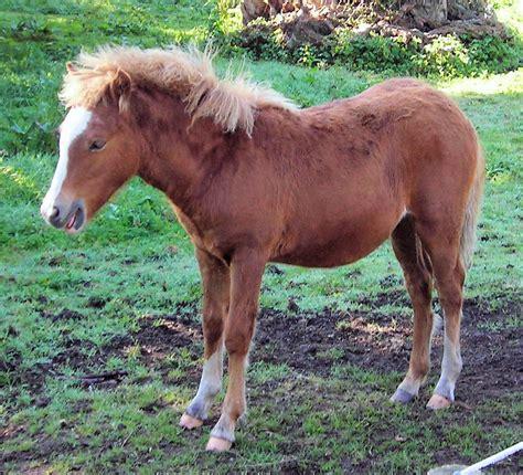 pony at kerry bog pony