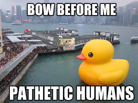 Meme Duck - image result for duck memes ingesting this is 2