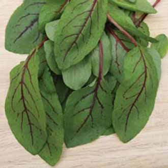 Bibit Benih Seed Sayur Lobak Radish Home Growing Vegetables sorrel veined