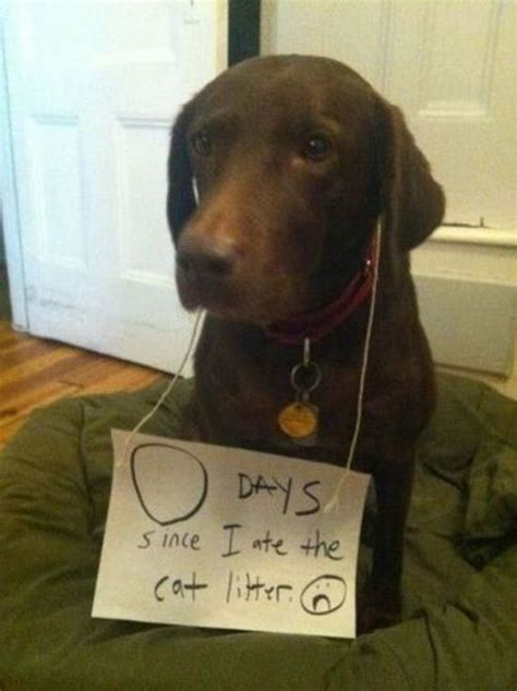 shamed dogs shaming is always hilarious barnorama