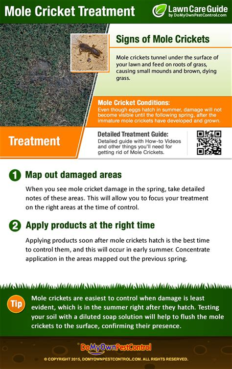how to get rid of moles in the backyard how to get rid of mole crickets treatment guide