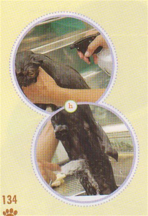 Hair Dryer Bulu Kucing cara merawat bulu kucing macam macam kucing dan keunikannya