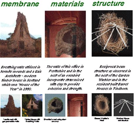 opinions on structures built by animals opinions on structures built by animals