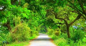 Beautiful Road This Is My Village Road With Natural