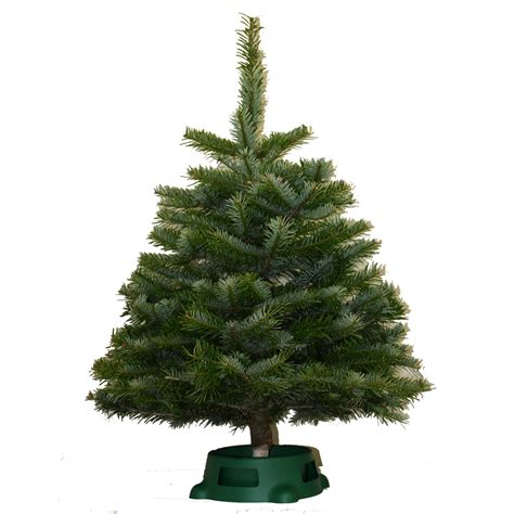 lowes real christmas trees shop 2 5 ft noble fir real tree at lowes
