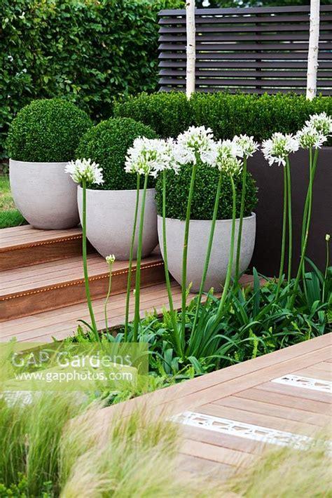 Contemporary Garden Plants Gap Gardens Modern Garden With Decking And Containers