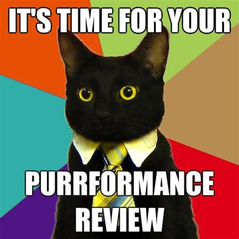 Business Cat Meme - image 100094 business cat know your meme
