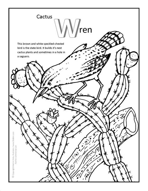 cactus wren coloring page  fun arizona coloring pages