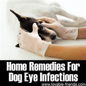 home remedies for eye infection pin eye infection fiv rip your story special needs