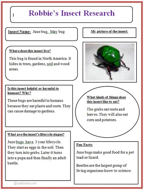 common insect research graphic organizer k 5