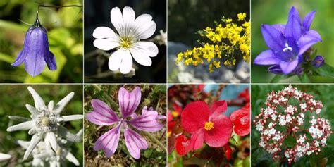 fiori della macchia mediterranea 17 best images about macchia mediterranea on